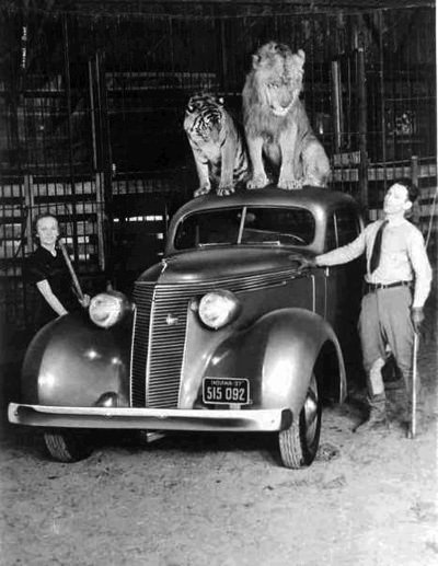 Mr & Mrs Beatty with new 1937 Studebaker and lions