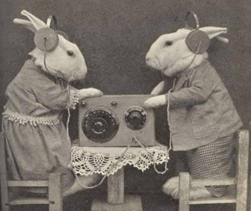 Rabbits Listening to the Radio