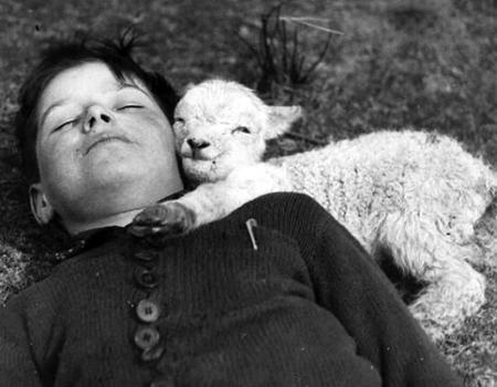 Sleeping With Sheep