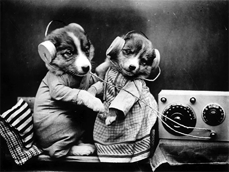 Dogs listening to radio