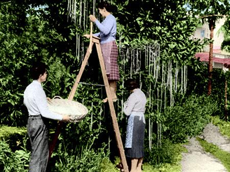 Spaghetti tree hoax