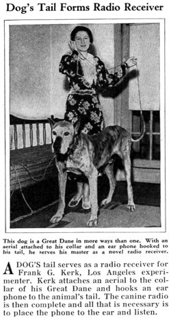A dog'as tail serves as a radio receiver for Frank G Kerk, Los Angeles, experimenter.  Kerk attaches an aerial to the collar of his Great Dane and hooks an ear phone to the animal's tail.  The canine radio is then complete and all that is necessary is to place the phone to the ear and listen.